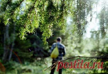 Капканы и ловушки для выживания в лесу  Если волею судьбы вас внесло в лесную глушь, а еды нет либо осталось совершенно не достаточно, можно испытать изловить зверька при помощи простых ловушек. Преимущество капканов перед обыкновенной охо…
