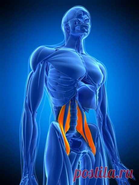 """Поясничная мышца, также известная своим необычным названием """"мышца души"""", является, возможно, самой важной мышцей в нашем теле. Без этой мышечной группы вы не сможете даже встать утром с постели. Более того, когда вы бегаете, катаетесь на велосипеде, танцуете, ходите или просто лежите на диване,..."""