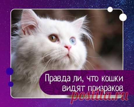 Правда ли, что кошки видят призраков — Эзотерика, психология, философия