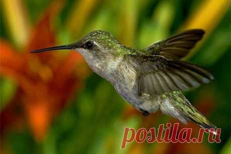 Необычные птицы нашей планеты