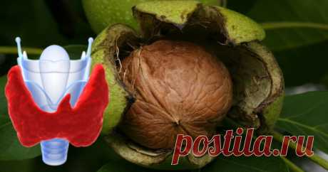 Preparations for a sore thyroid gland and walnuts are incompatible: products which cannot be eaten if you sat down on the drugs Use of Walnuts kills force of drugs for a sore thyroid gland!