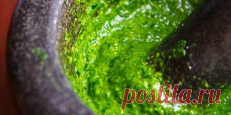 Pesto de la verdura del rabanillo: los platos De hortalizas: la Cocina: Subscribe.Ru