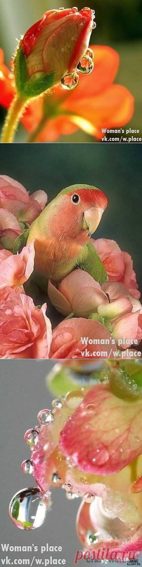 Woman's place|Прекрасная женщина, лучшая хозяйка