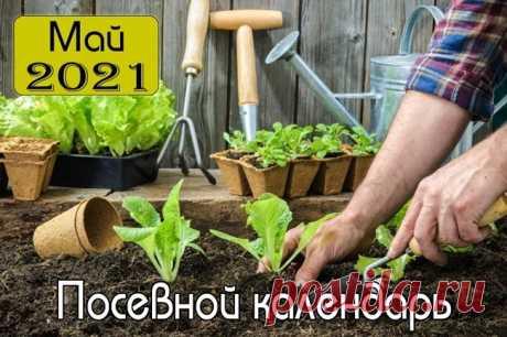 Благоприятные дни для садовода и огородника на май 2021 года: календарь, что сажать