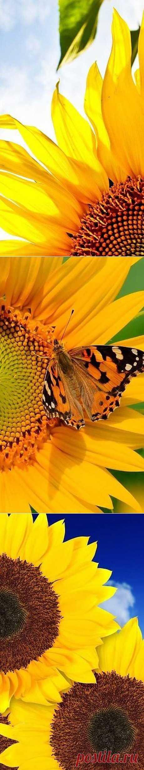 A mí sueña el verano verde con las venas de los colores amarillos...