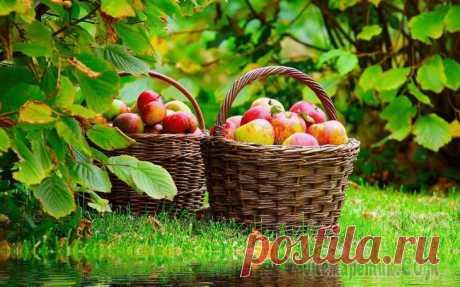 Йод, зеленка, мел — отличная защита для сада и огорода от вредителей и болезней!