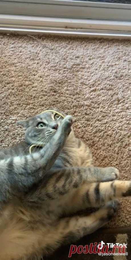 Wet noodle breaks cat