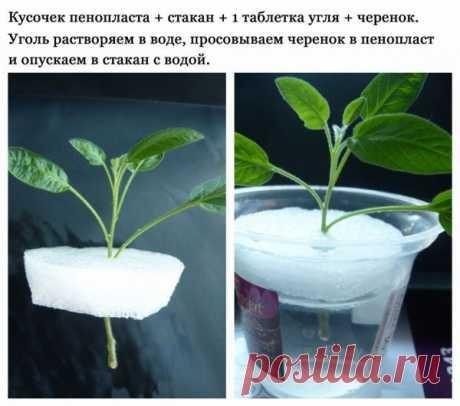 Садоводство, дача / Выращивание / Pinme.ru