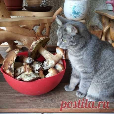 Милые котейки / Питомцы