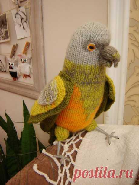 Сенегальский попугай спицами