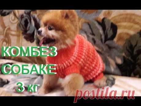 Одежда для собак.КОМБИНЕЗОН спицами./sweater to the dog/Pullover zum Hund