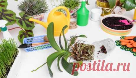 Правильная пересадка орхидей: раскладываем все по полочкам | Полезно (Огород.ru)