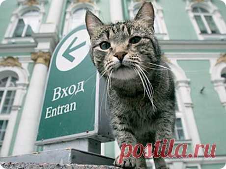 В Питере открылся музей кошки | ZooPicture.ru