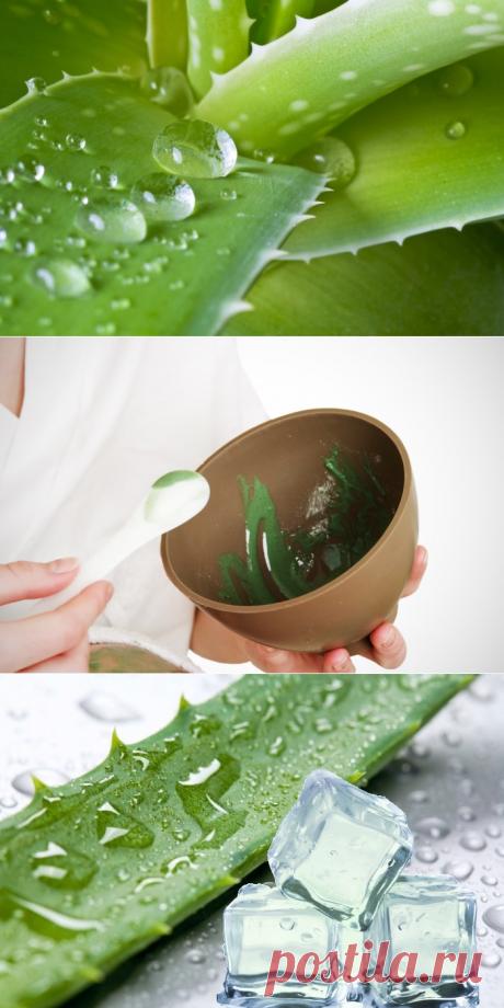 Польза алоэ для кожи лица: рецепты домашних масок и лосьонов