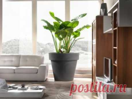 Вопрос: Как выбрать кашпо для больших растений Учимся покупать что-то менее банальное, чем терракота из садового гипермаркета