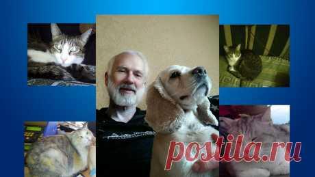 Как домашние животные влияют на наше здоровье   Мудрый ЗОЖник   Яндекс Дзен