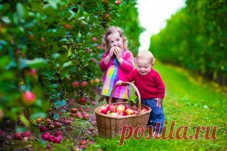Семь секретов хорошего урожая яблок Выращивать яблоки проще всего. Но, к сожалению, и они не всегда радуют урожаем. Причин такого явления много. Мы расскажем лишь о самых распространенных. Секрет 1: хочешь урожай – ветку наклоняй Иногда яблони чересчур здоровые, мощно идут в рост и практически не плодоносят...