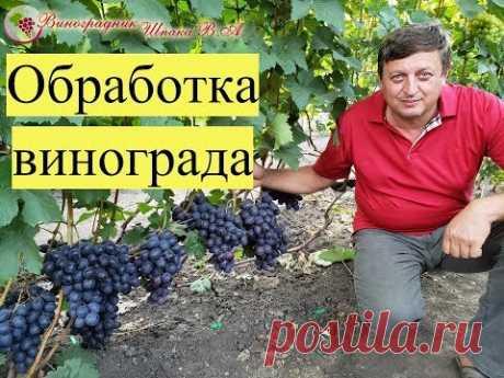 Схема обработки винограда