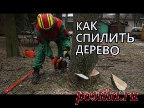 Как правильно пилить крупные и небольшие деревья бензопилой, спил и валка леса