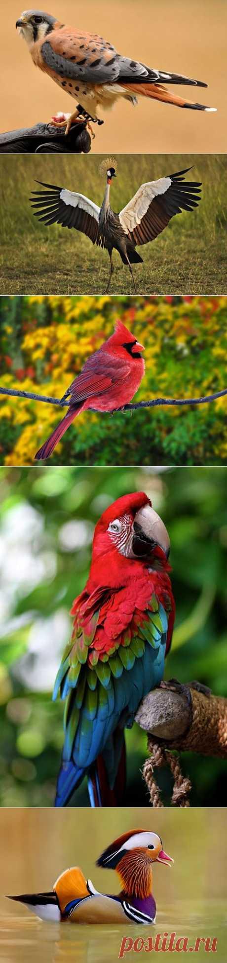 (+1) тема - 10 самых красивых птиц в мире | Наука и техника