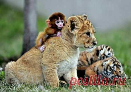 16 трогательных снимков, на которых подружились совершенно разные животные