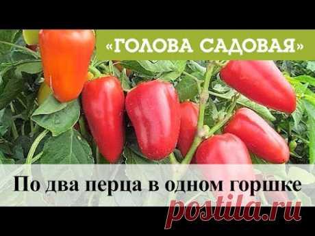Голова садовая - По два перца в одном горшке
