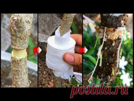 Попробуйте извлечь дерево с помощью туалетной бумаги, и результаты укоренились