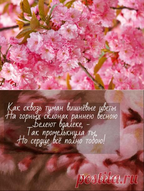 📚 Из японской лирики. 3 красивые танки о любви и сакуре, которые вызывают возвышенные чувства | Книжные мысли ЛeTTы | Яндекс Дзен