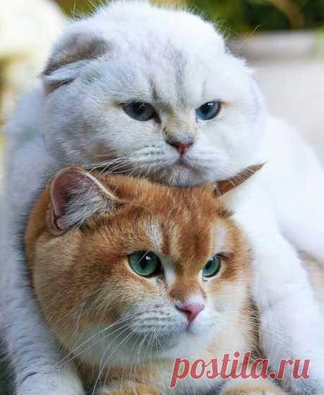 Два котика лучше одного
