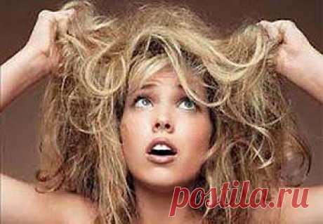 Сухие волосы. Как бороться с сухостью и ломкостью волос? |