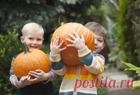 Картинки для детей с тыквой (35 фото) ⭐ Забавник
