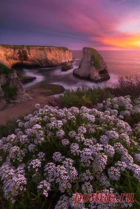 Transition by IMG Imagery (Ian M. Gaston).....  #flowers #sunset #spring #seascape #burn #cove #santacruz #blooms