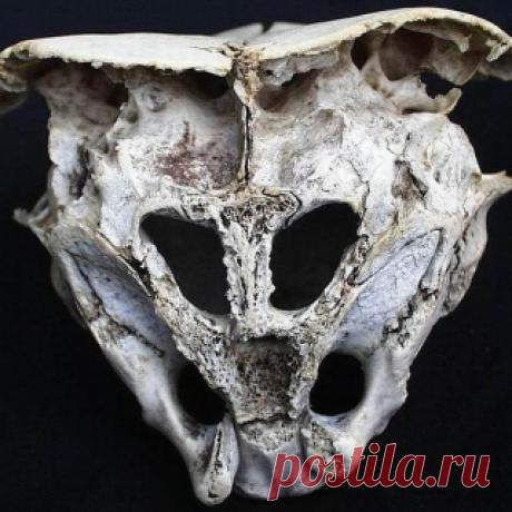Таинственная находка из Болгарии: череп инопланетянина? | Журнал РЕПИН.инфо