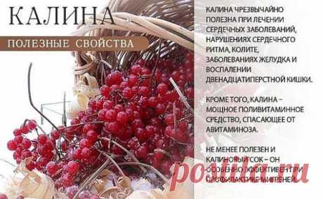 ЦЕЛЕБНЫЕ свойства КАЛИНЫ: простые рецепты. Калина - одна из самых ПОЛЕЗНЫХ ягод в природе.  В калине всё ЦЕЛЕБНО: кора, веточки, цветы, ягоды и сушёные косточки.  Наши предки о лечебных свойствах калины, знали, что ее ягоды улучшают работу сердца, обладают успокаивающим действием. Витамина С в калине в 1, 5 раза больше чем в лимоне. В ней есть железо, селен, йод, каротин, фосфор. С мёдом калину назначали при простудных заболеваниях. Чай из калины пили при гнойничковых забо...