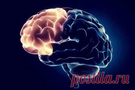 Лобные доли мозга - место, где рождается личность и где она может умереть | Всё об алалии, аутизме и ЗПР | Яндекс Дзен