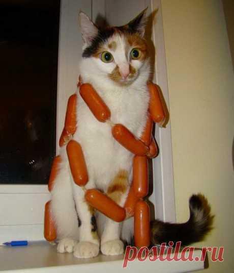 Вася, ты самый лучший котик во всём мире!