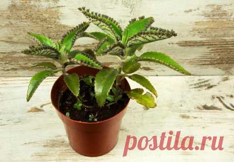 Window plants for your kitchen: 20 ideal options