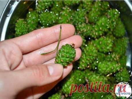Зеленые шишки сосны: эликсир здоровья, который может сделать каждый! #красотаздоровье