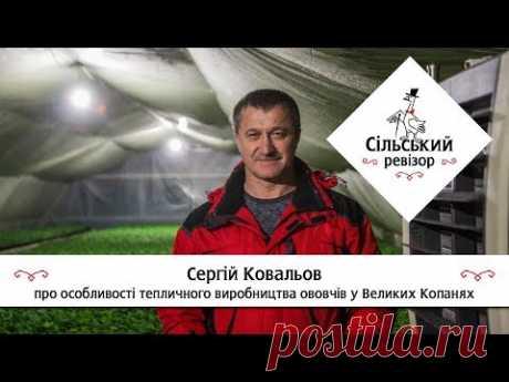 Сергій Ковальов - про особливості тепличного виробництва овочів у Великих Копанях