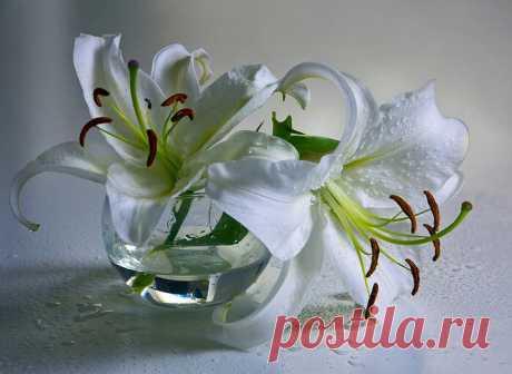При угревой сыпи - Красота и здоровье Настойка из лепестков белой лилии - одно из лучших средств лечения угревой сыпи, гнойничковых заболеваний. В бутылку сложить лепестки белой лилии. Залить