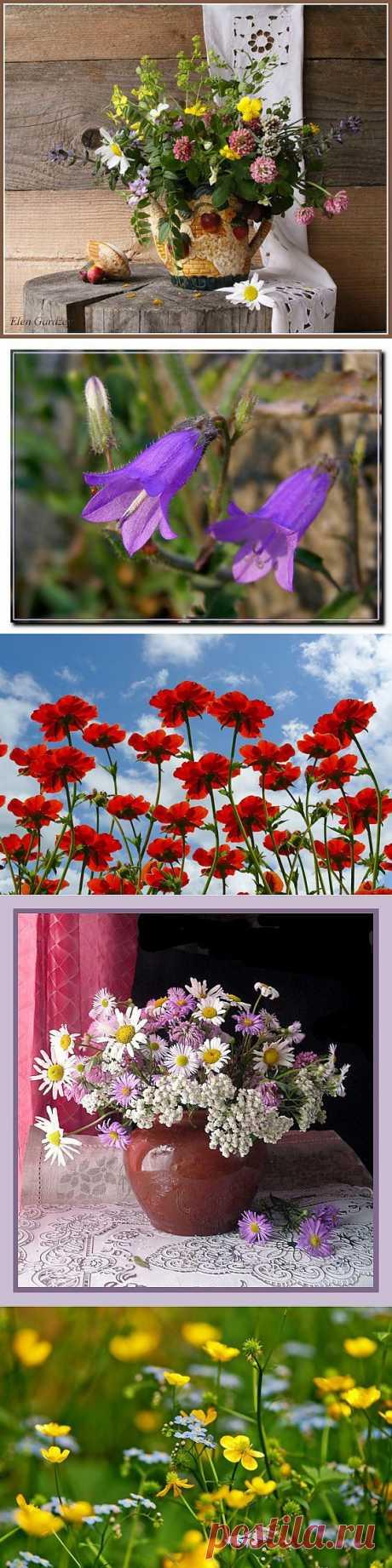 Луговые цветы  (35 фото). LiveInternet -
