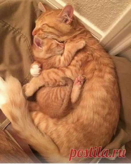 В объятиях мамы и сон крепче