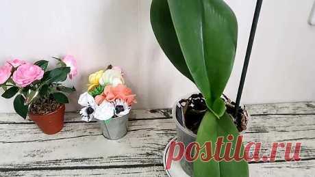 Орхидеи цветут как бешеные! Живая вода для орхидей!