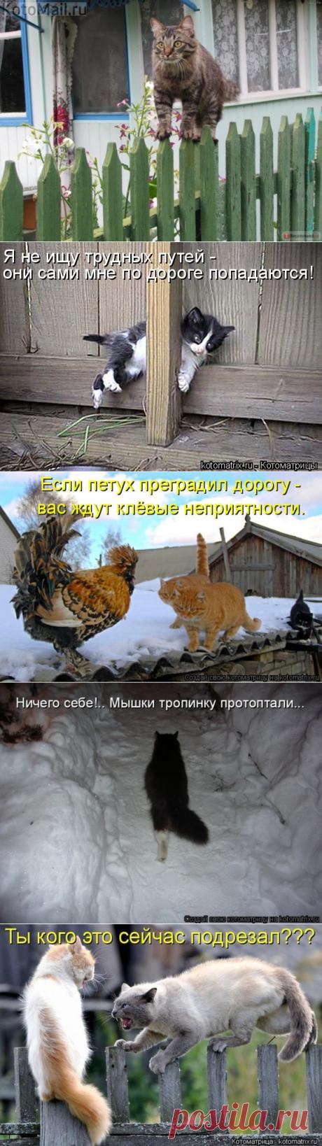 Штакетная тропа | KotoMail.ru