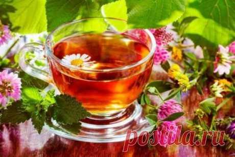 Травы, которые не стоит добавлять в чай « Ярополч.ру