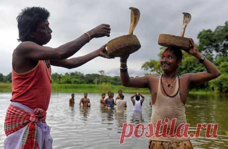 Заклинатели змей и местные жители исполняют трюки с ядовитыми змеями на фестивале Jhapan, посвященном царице змей, богине Манаса Деви, Силли, Индия.