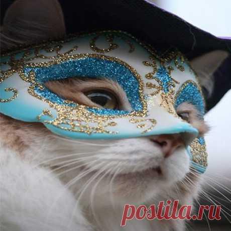 Art pro  cats