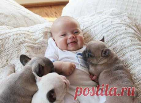 Собачий язык: понимают ли его дети?