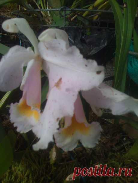 Orquidea de lalita y felix y sus cuidados
