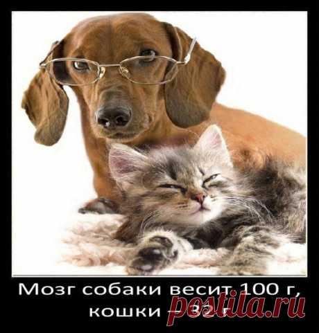 Занимательные факты о собаках / Научный хит